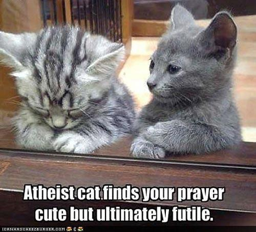 Atheist cat finds your prayer cute, but ultimately futile.