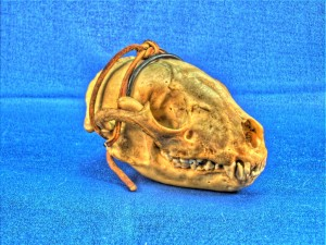 Raccoon skull with HDR